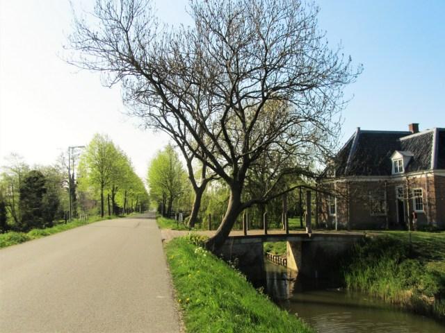 Beemster in Beeld - Volgerweg, sommige bomen nog kaal