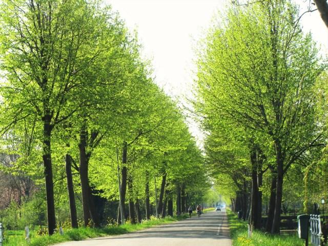Beemster in Beeld - Volgerweg, veel bomen met een zacht, lichtgroen blad
