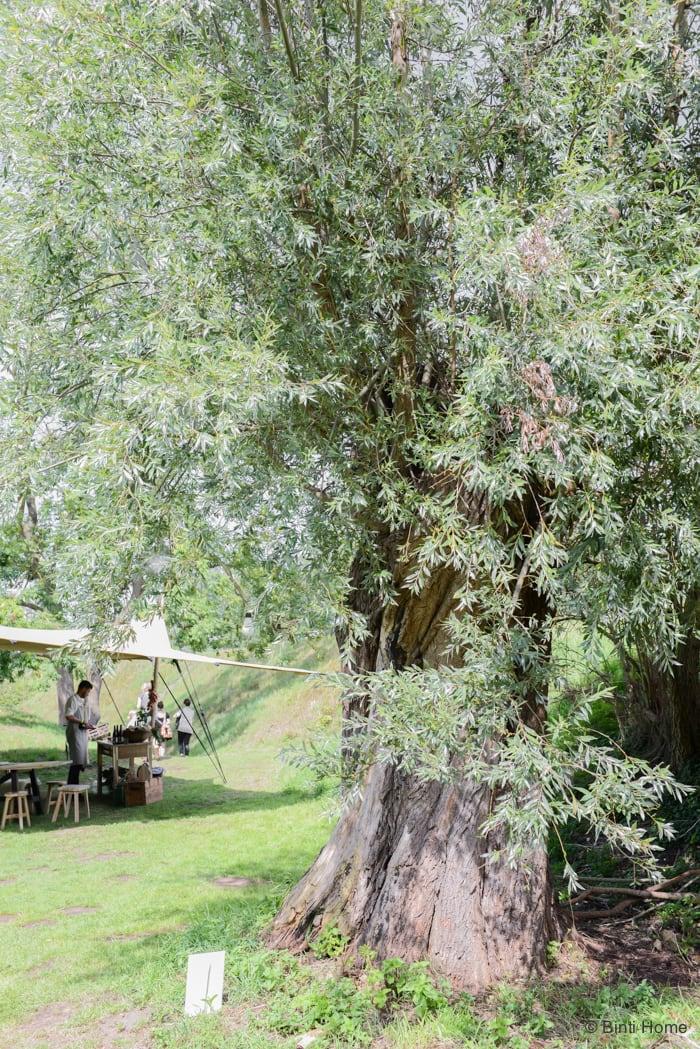 Ikea Catalogus persdag olijfboom natuur Binti Home Blog ©BintiHome