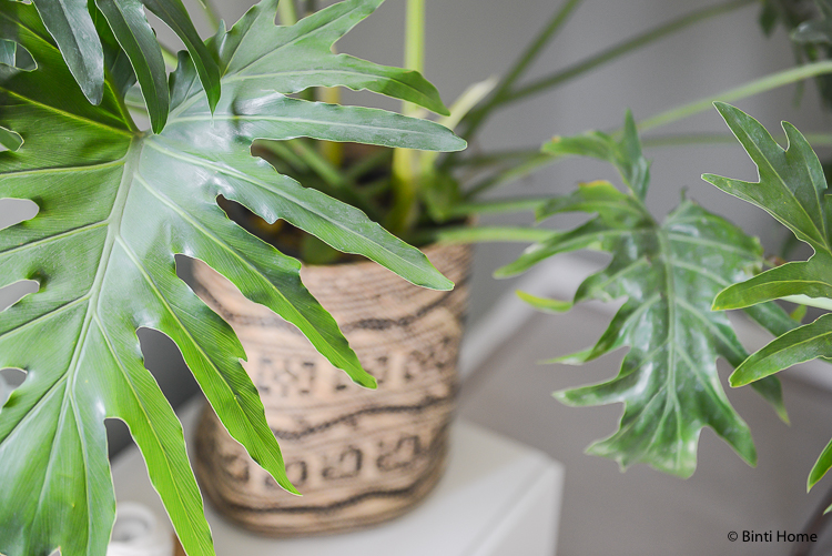 Plants How to create bohemian interior style at home ©BintiHome
