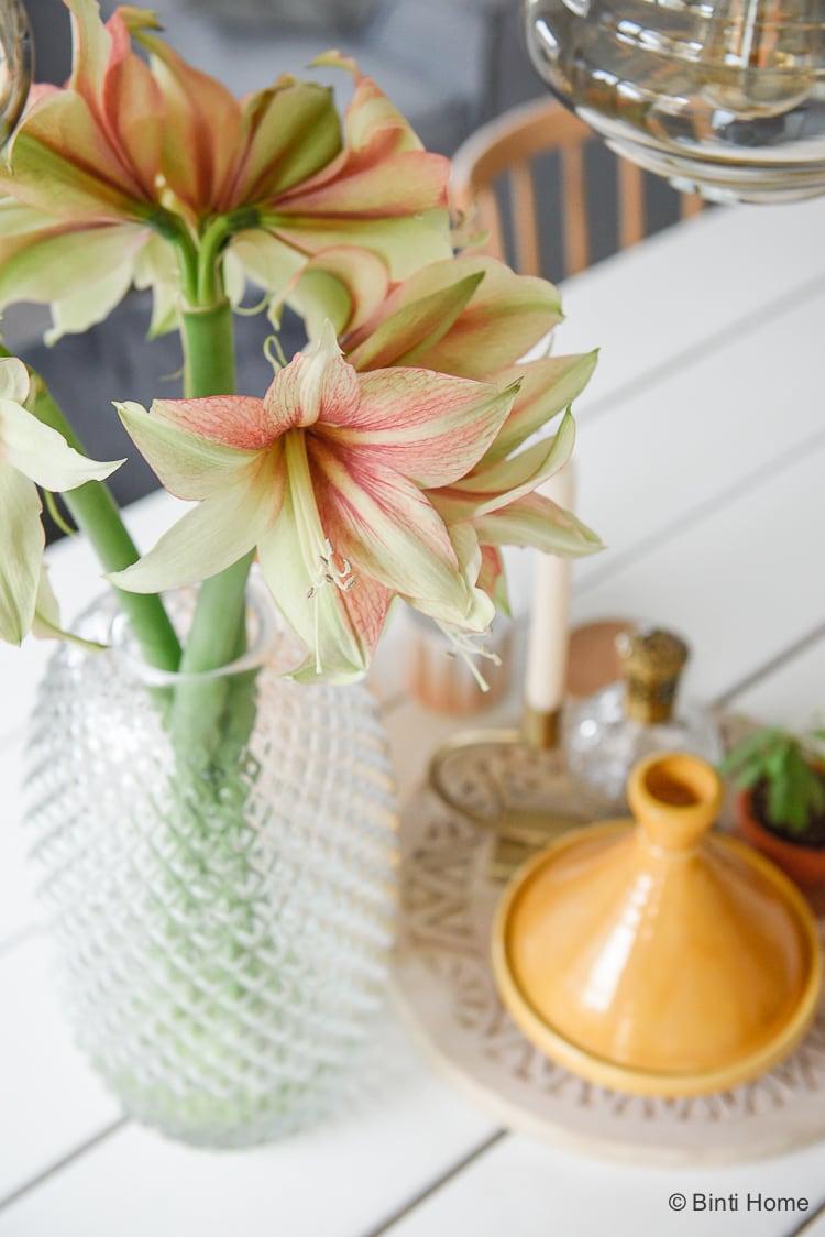 Amaryllis bloem van de maand december 2017 Mooiwatplantendoen ©BintiHome