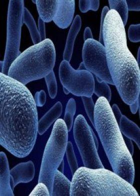 bacteria (Custom)