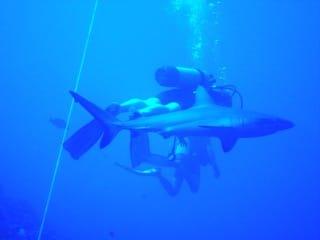 plongé touché requin