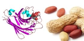 Arachis-hypogaea-Peanut-lectin