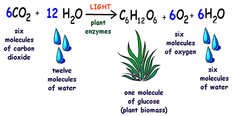 Αποτέλεσμα εικόνας για photosynthesis reaction
