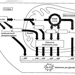 Blank Electron Transport Chain Diagram 2 Port Valve Wiring Bil 150 Nt Workshop 4