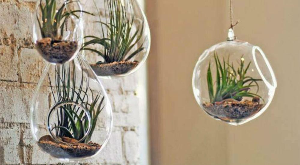 DIY 5 ides cratives pour un jardin dintrieur  Bio  la une