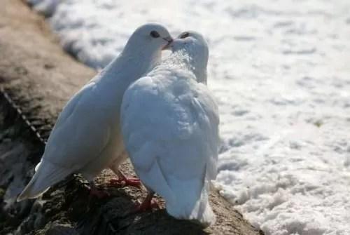 Αποτέλεσμα εικόνας για Μόνον η αγάπη χ