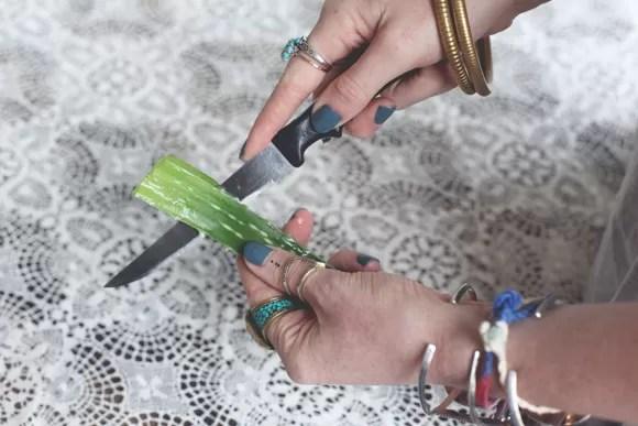 Cutting-aloe-plant