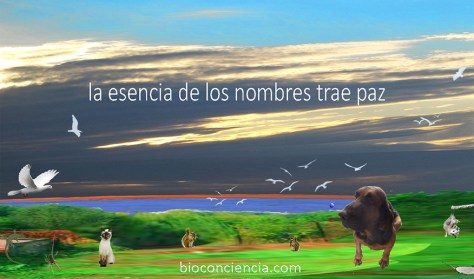 los nombres de los animales datan de adam, quien llama y nombra a los animales, aves y bestias del campo (génesis 2 v20) acercarse a la esencia de los nombres trae paz