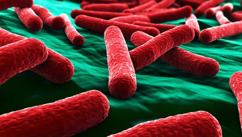 Αποτέλεσμα εικόνας για Escherichia coli