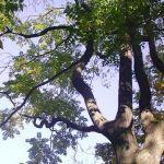 Conoce a los árboles 2