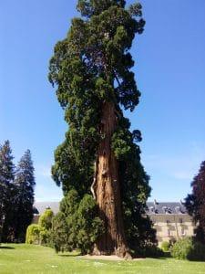 Conoce a los árboles 1