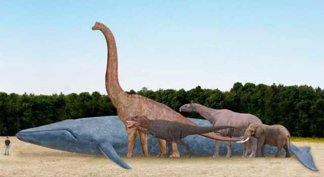 tamano-de-las-ballenas-azules