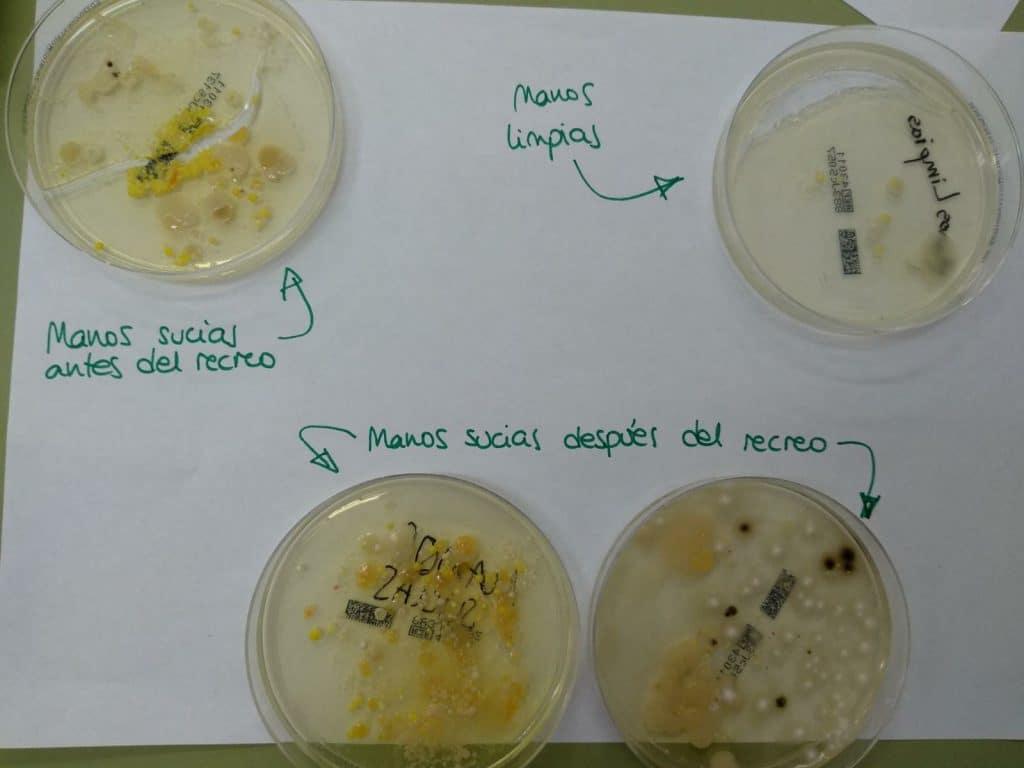 Análisis de los microorganismos de nuestro entorno 1