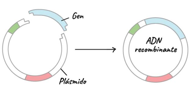 Aplicaciones de la Biotecnología 1