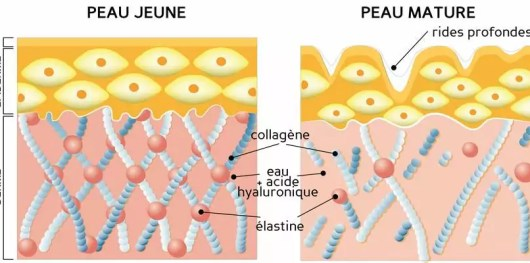 Image result for collagene peau