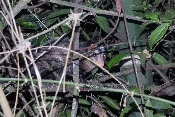 Nueva área protegida en Cali: DRMI Río Pance