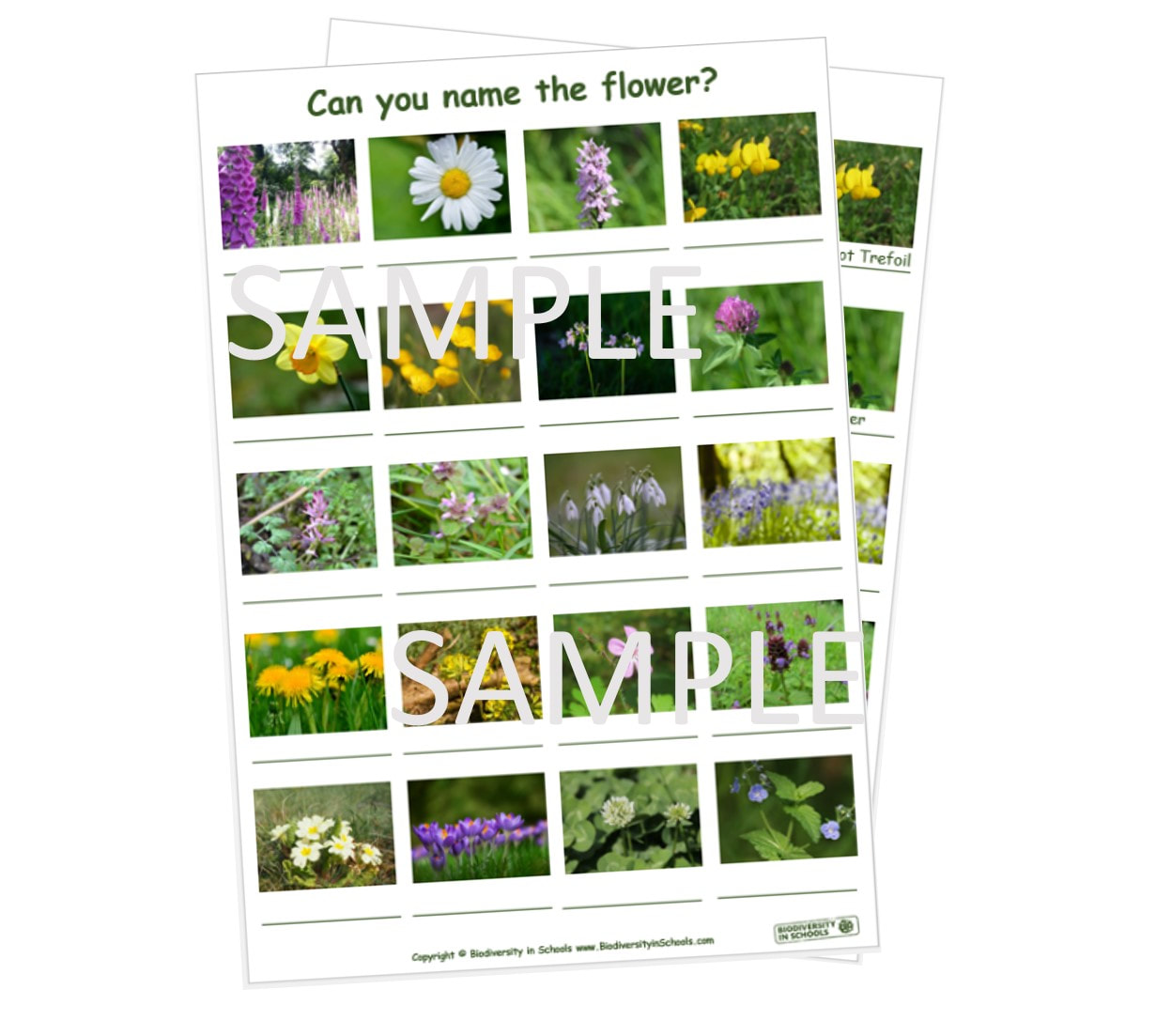 Name That Flower Worksheet