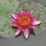 Lotus & Science ošetrenie