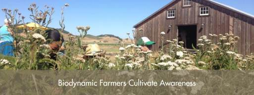 What Is Biodynamics? | Biodynamic Association