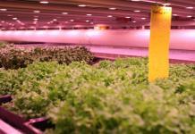 La agricultura urbana viene creciendo en las grandes ciudades