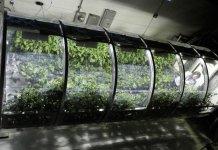 Estás aquí: Inicio/Agricultura ecológica/La NASA trabaja en un invernadero espacial para el cultivo sostenible en Marte y en la Luna La NASA trabaja en un invernadero espacial para el cultivo sostenible en Marte y en la Luna
