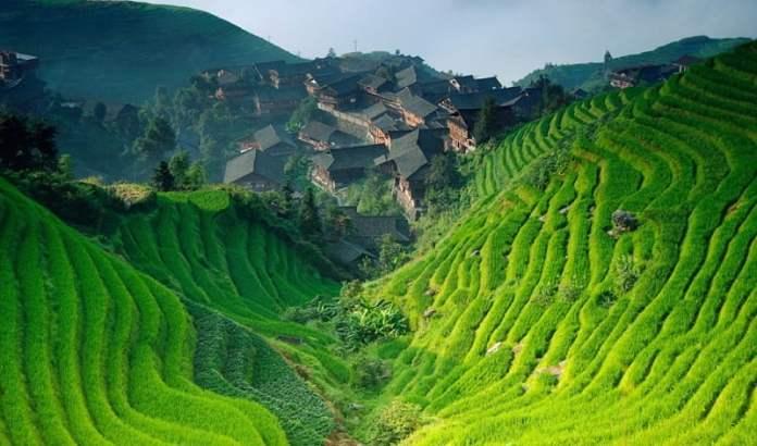 Campo de arroz amenazado por el cambio climático