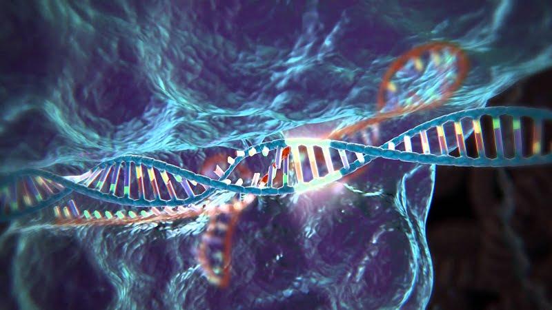 Proteínas manipuladas genéticamente expanden la capacidad de la edición genómica por CRISPR-Cas9