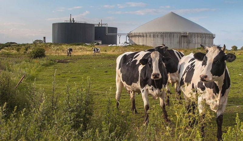 Galicia acelera la transición hacía una ganadería sustentable