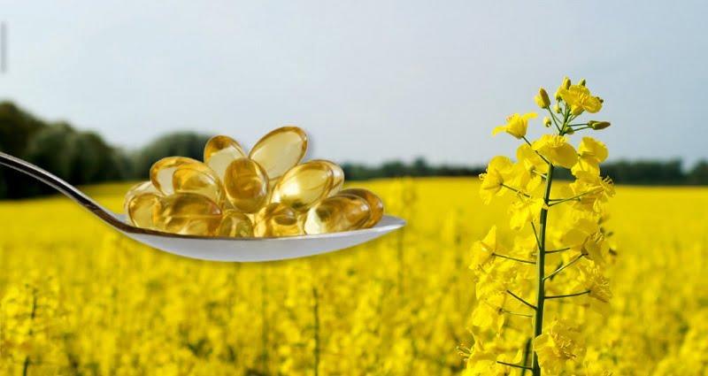 Nuseed y ADM se asocian para expandir el mercado de canola alta en omega-3