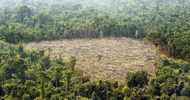 Las plantaciones de coca y sus conflictos alimentan la deforestación colombiana