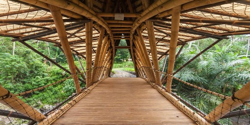 Bioeconomía del Bambú