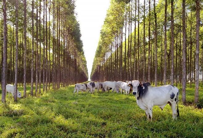 La producción de proteína animal y el sector foresto industrial protagonizan el debate en Corrientes