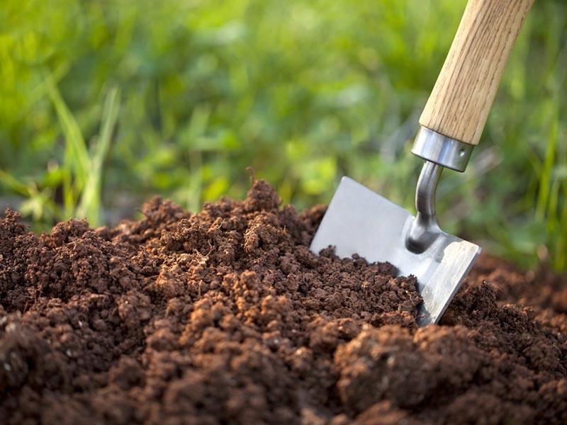 Descubren mecanismo mediante el cual el suelo absorbe carbono