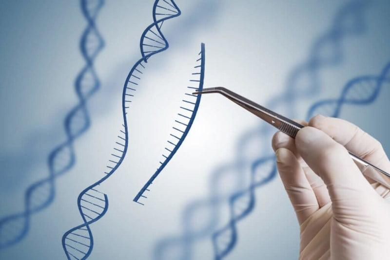 El Reino Unido más cerca de autorizar la edición genómica