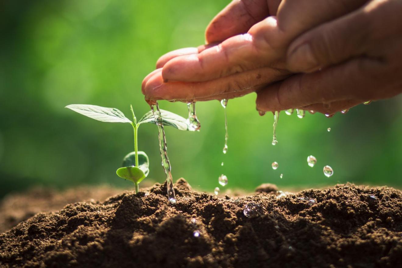 IICA propiciará diálogo de Ministros de agro y ambiente para impulsar la adaptación al cambio climático en Centroamérica