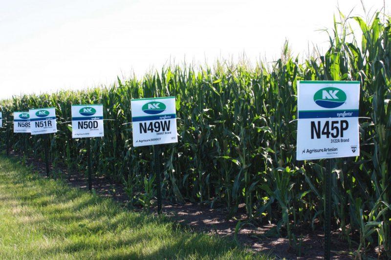NK vuelve al mercado apostando a la innovación en el mercado de semillas