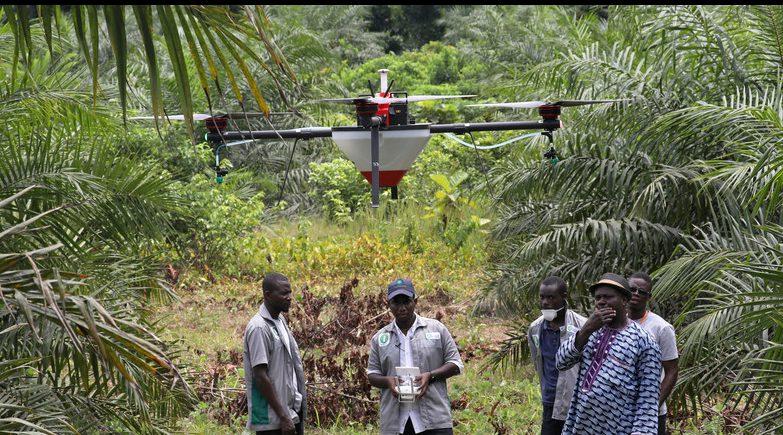 Malasia apuesta por las cooperativas y la agricultura digital para sacar a los pequeños palmicultores de la crisis