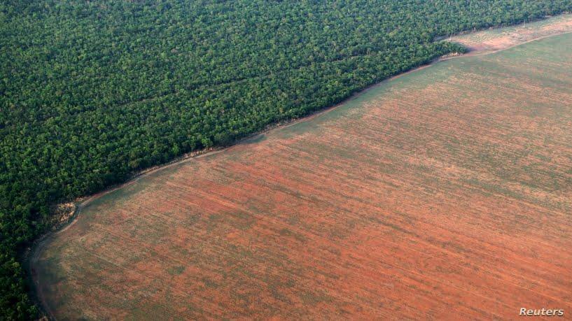 Aseguran que el mayor consumo de etanol en Brasil compensó la emisiones por deforestación