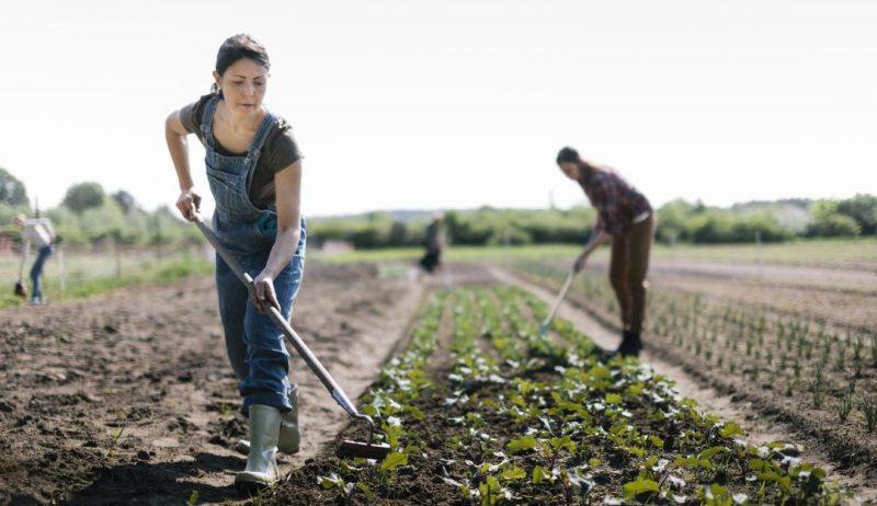 Sondeo/IICA: Covid-19 afecta a agricultores familiares y repercutirá en oferta de alimentos