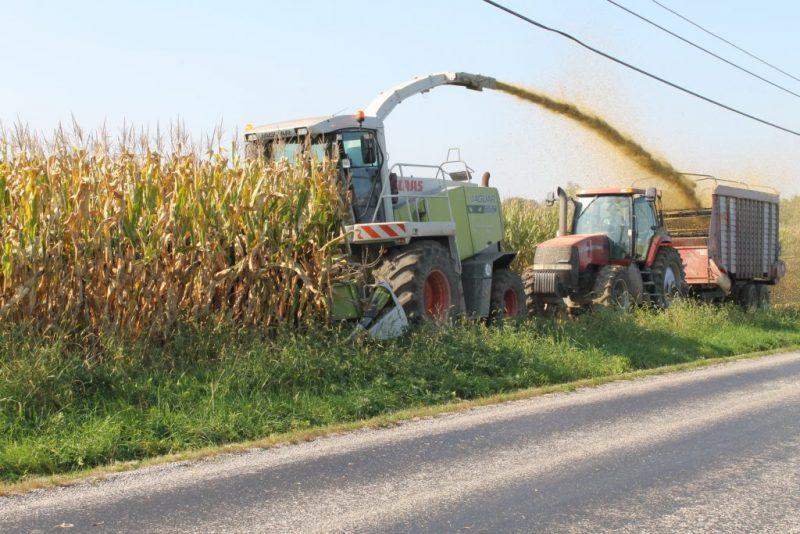 Japón activa programa de emergencia de reservas de maíz