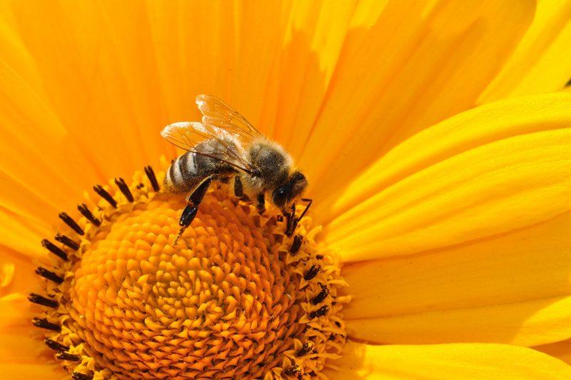 Francia prohíbe dos pesticidas de EEUU