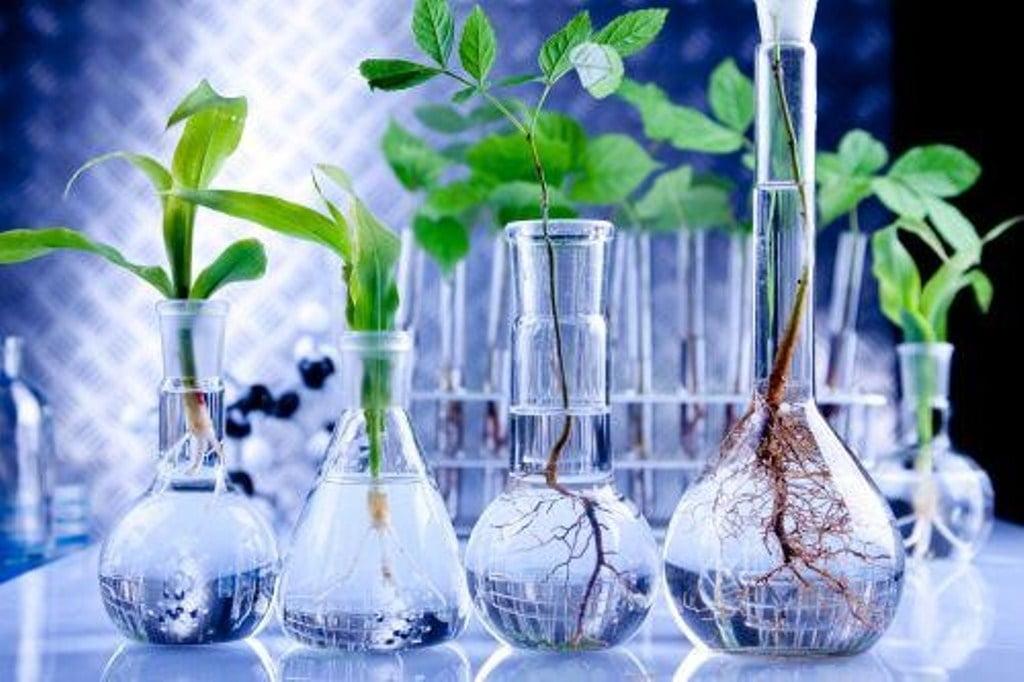 Importante avance pone a los químicos renovables más cerca de ser una realidad