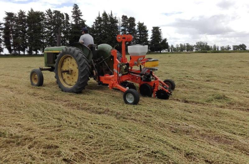 INTA presentó la primera sembradora de labranza cero para zapallo
