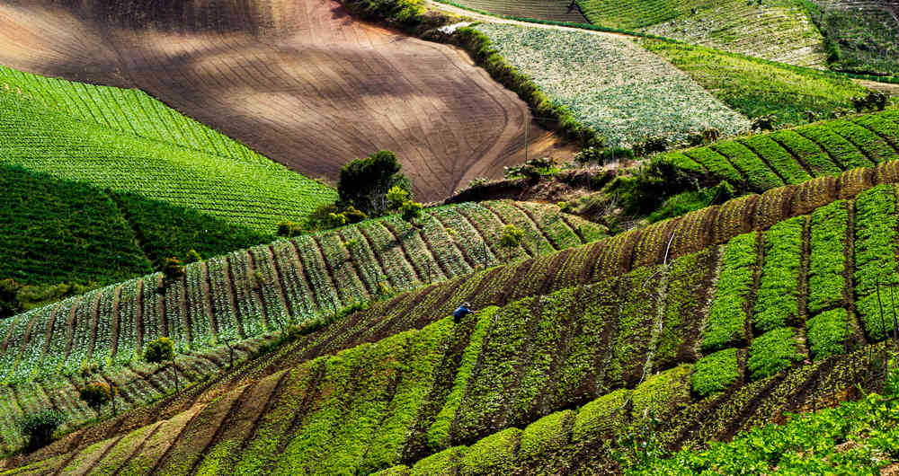 Estos serán los productos del agro que más crecerán en Colombia durante la próxima década
