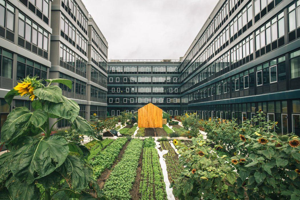 Por el aislamiento social florece la agricultura urbana
