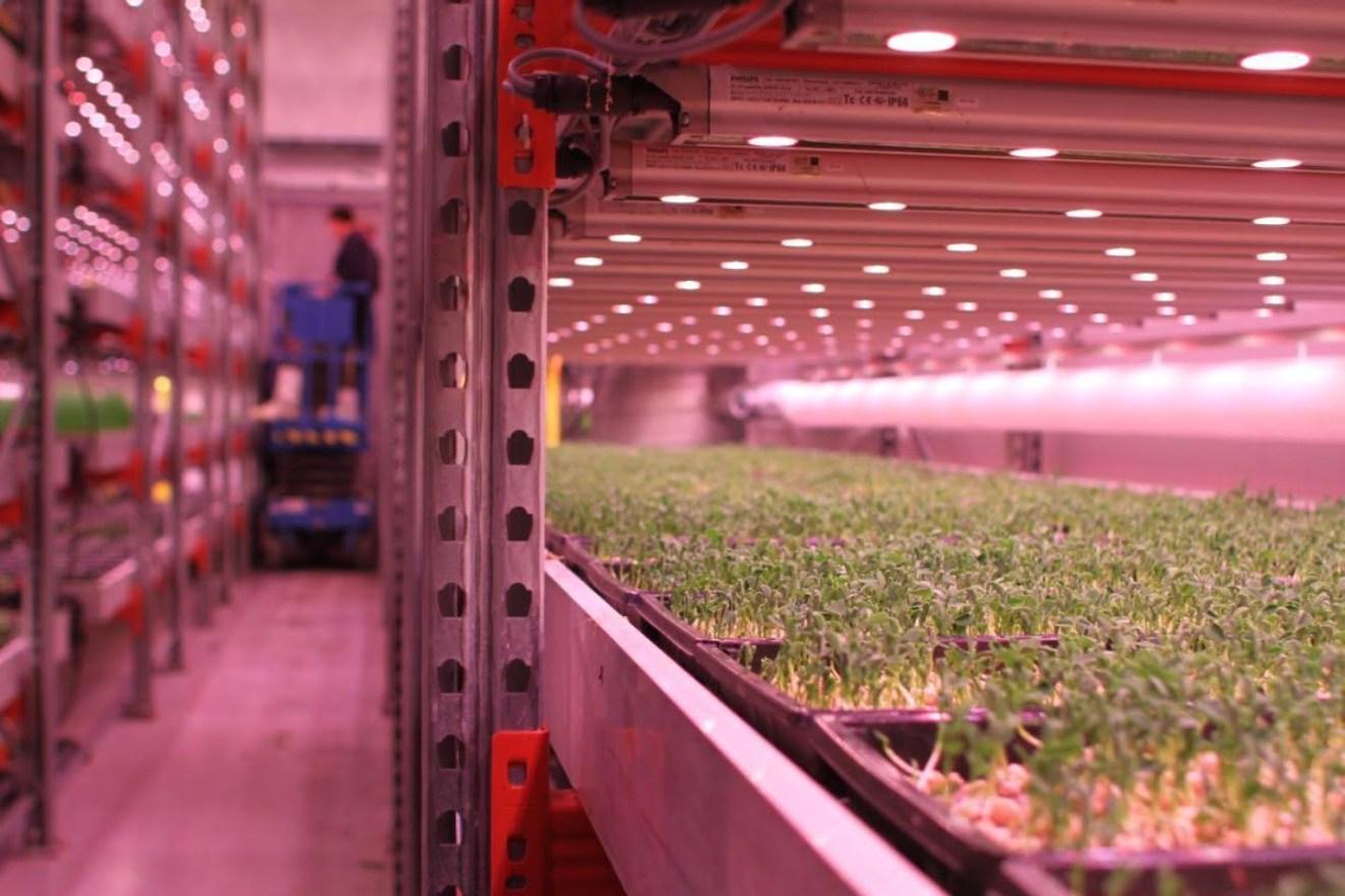 Brasil se entusiasma con la agricultura urbana