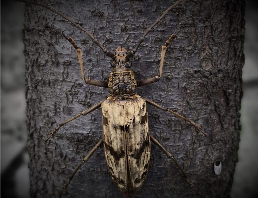Inspirados en un escarabajo desarrollaron un materiales aislante de bajo costo