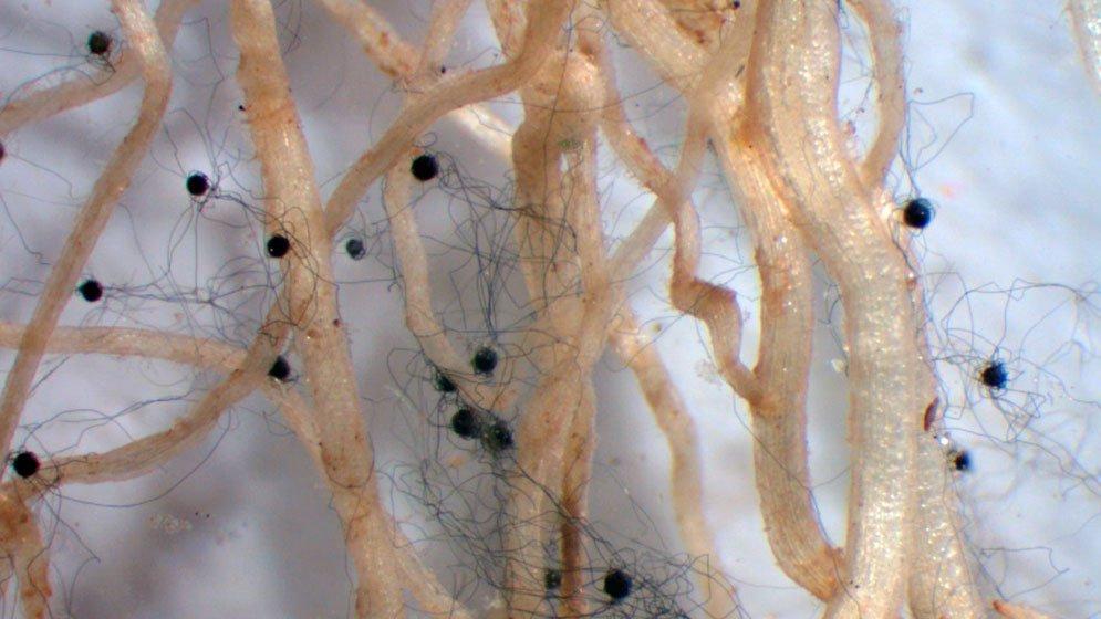 En búsqueda de nuevas estrategias biotecnológicas